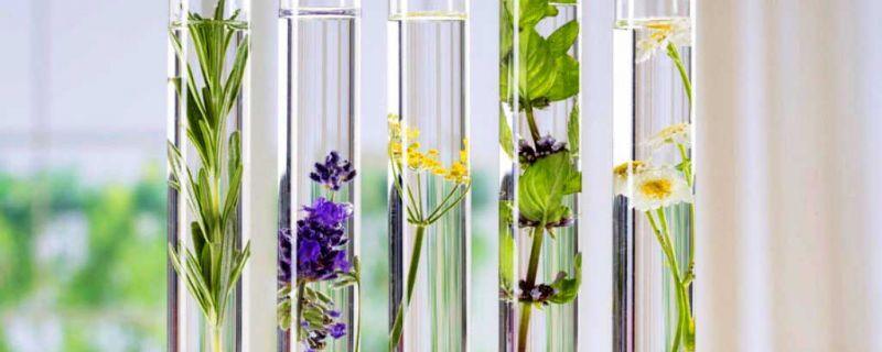3 recetas naturales para limpiar y calmar tu piel